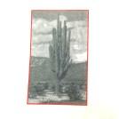 saguaro close